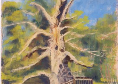 187i-2019 Brocéliande le chêne Guillotin